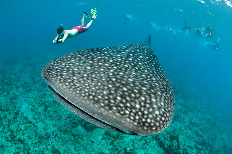 DSC_2497_edit_whale shark_carpe diem.jpg