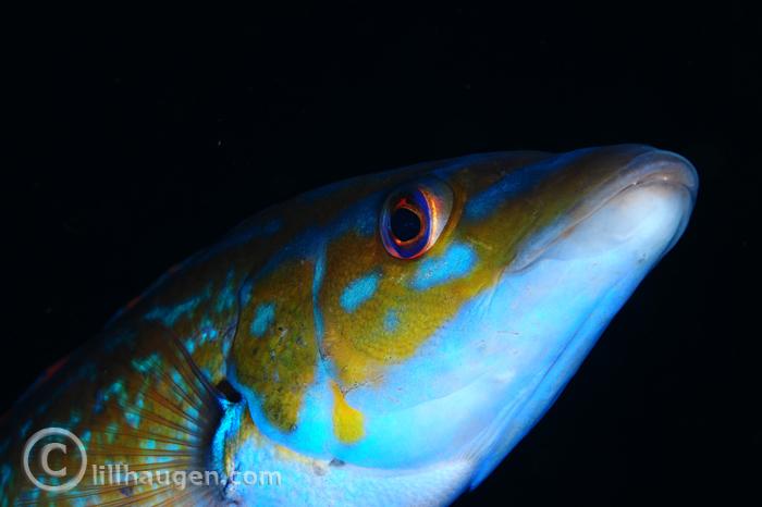 DSC_9319_NM_2013_FISH_700.jpg